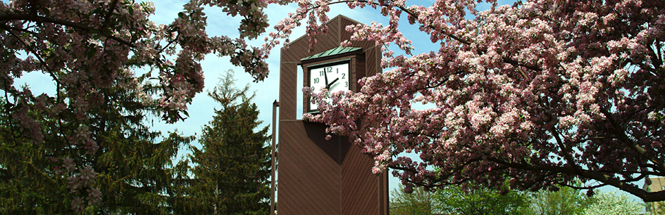 Cherry blossoms in front of clock tower on campus