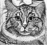 """Close-up showing details of the large face of a Maine Coon/ Siamese cat named """"Mando."""""""